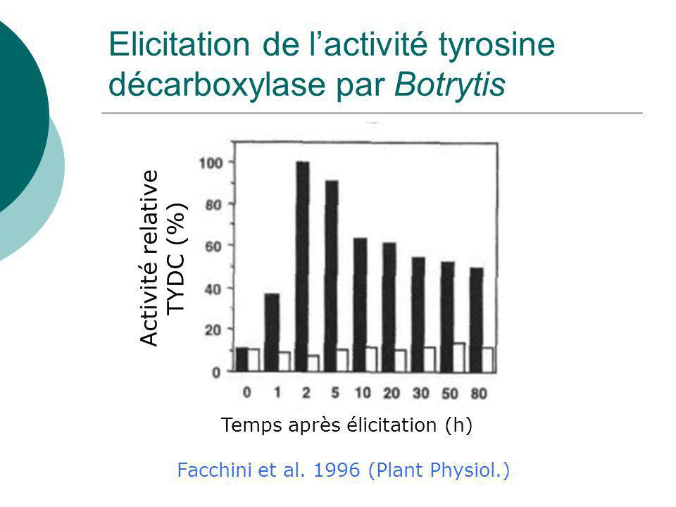 Elicitation de l'activité tyrosine décarboxylase par Botrytis