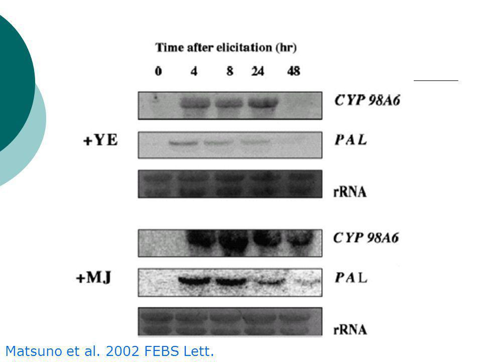 Matsuno et al. 2002 FEBS Lett.
