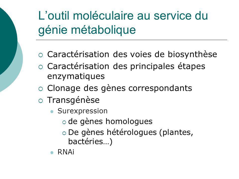 L'outil moléculaire au service du génie métabolique