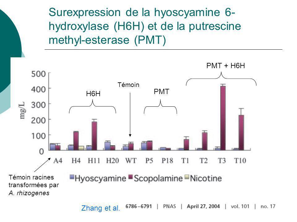 Surexpression de la hyoscyamine 6-hydroxylase (H6H) et de la putrescine methyl-esterase (PMT)