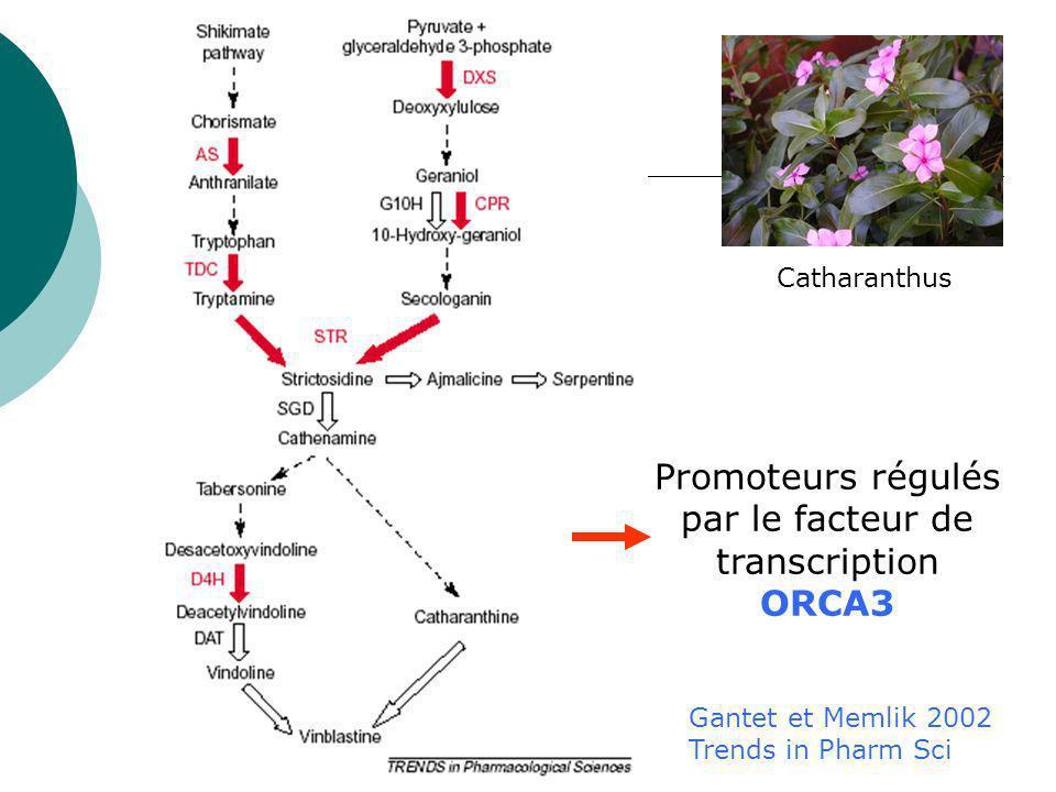 Promoteurs régulés par le facteur de transcription ORCA3