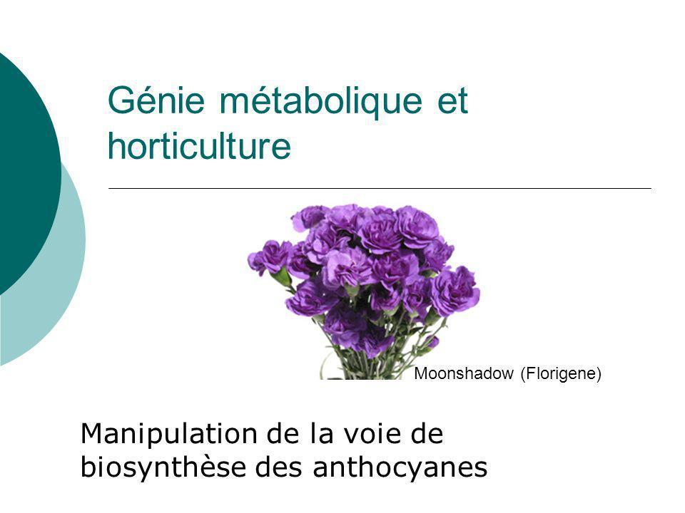 Génie métabolique et horticulture