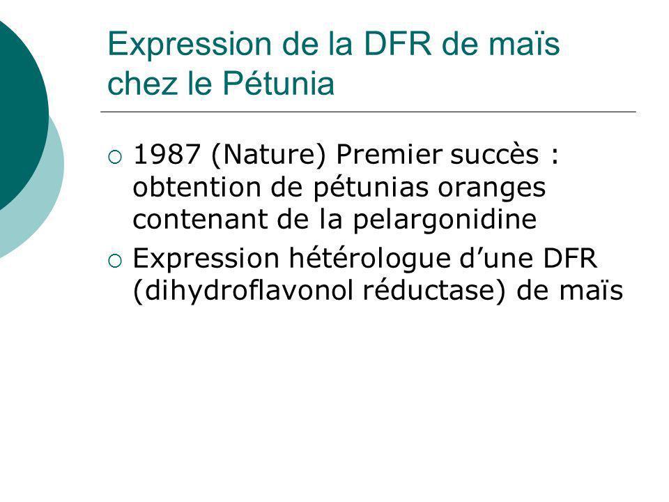 Expression de la DFR de maïs chez le Pétunia