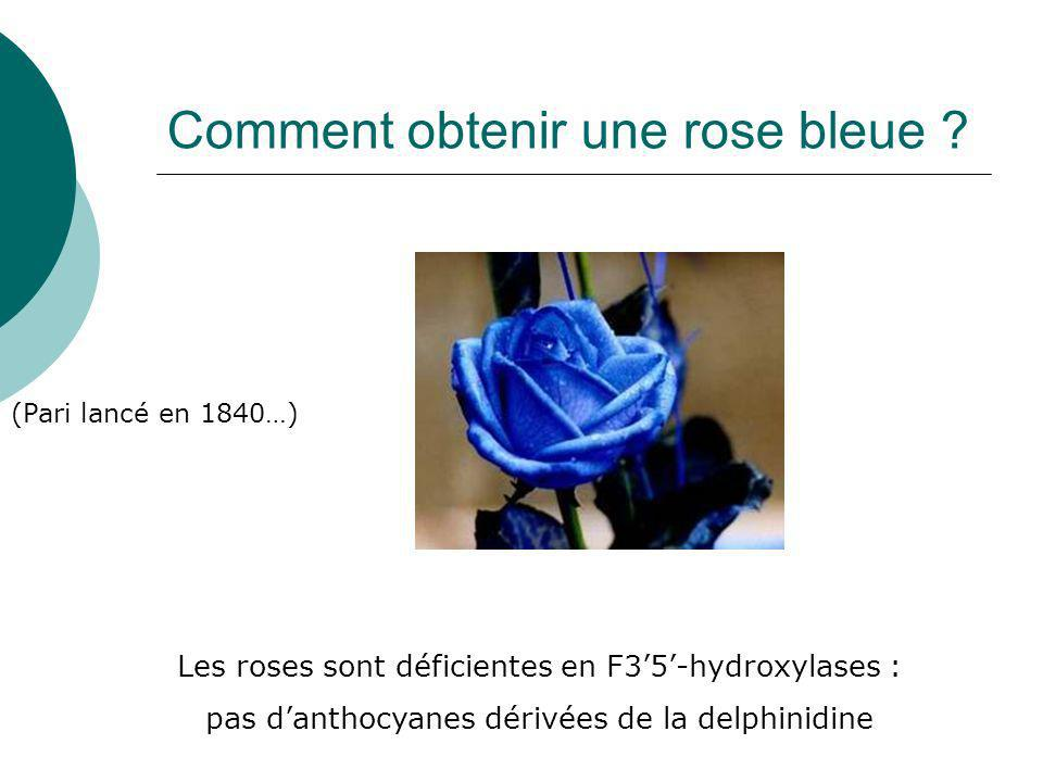 Comment obtenir une rose bleue