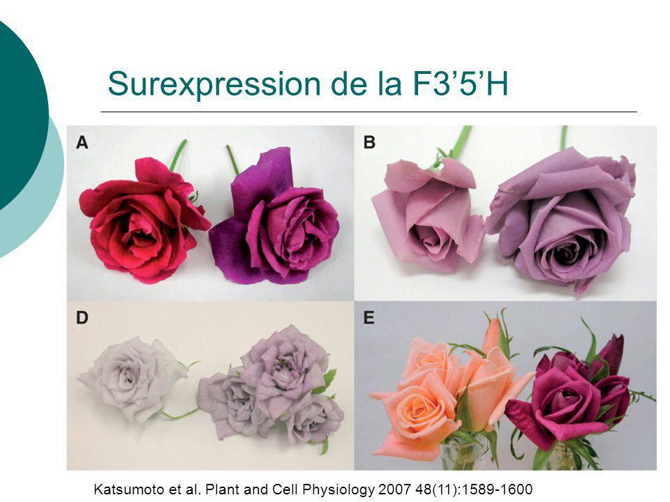 Surexpression de la F3'5'H