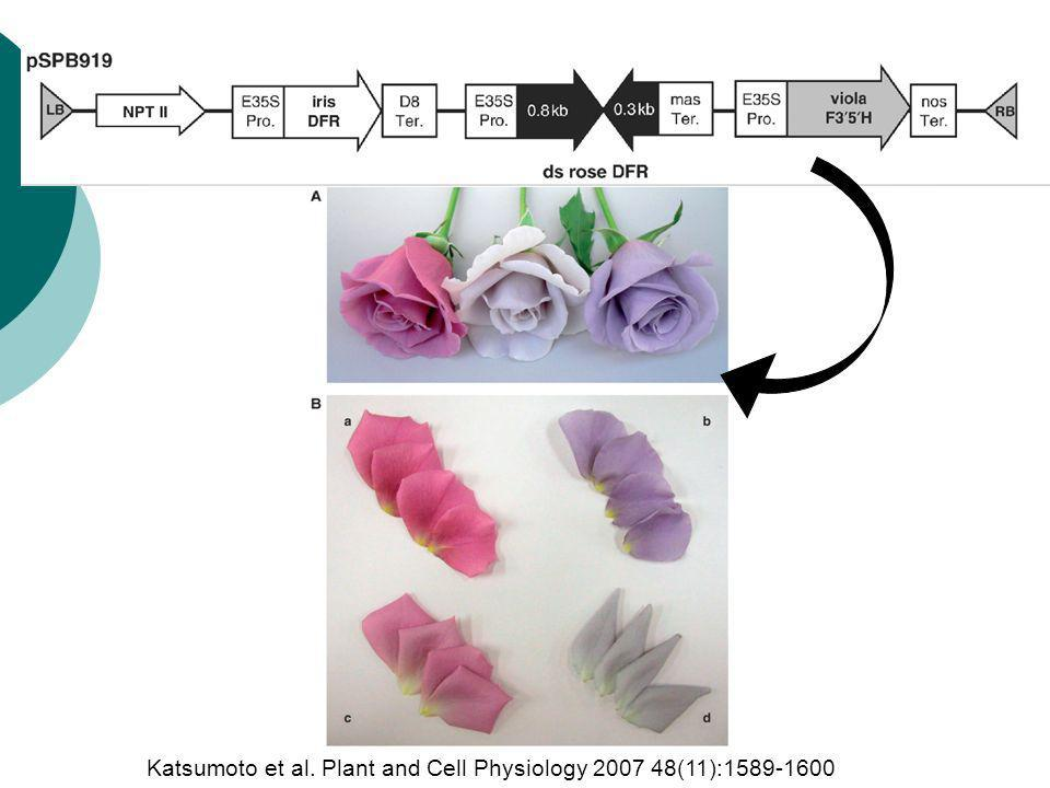 Katsumoto et al. Plant and Cell Physiology 2007 48(11):1589-1600
