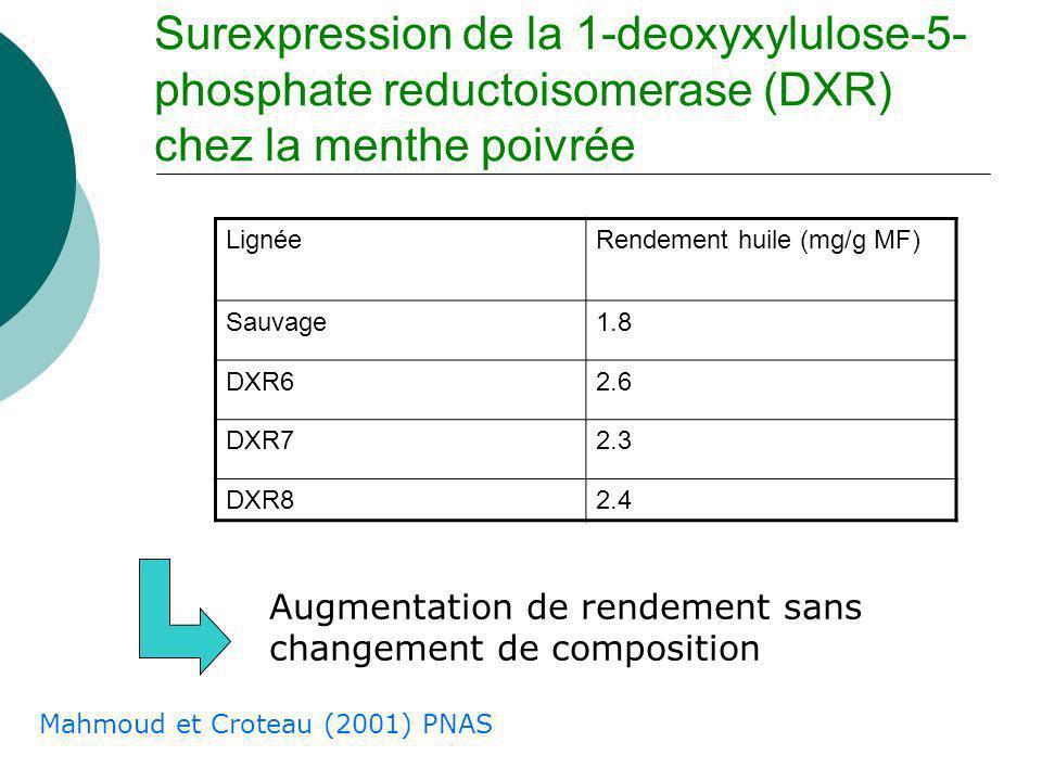 Surexpression de la 1-deoxyxylulose-5-phosphate reductoisomerase (DXR) chez la menthe poivrée