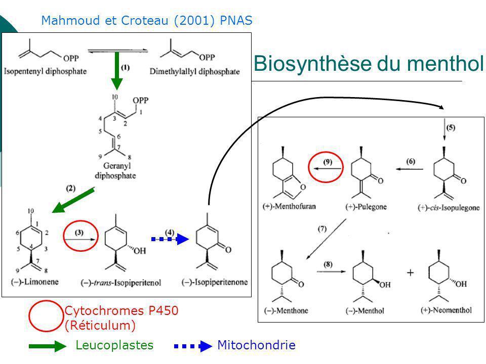 Biosynthèse du menthol