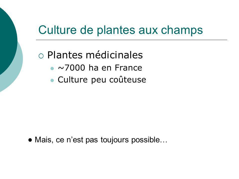 Culture de plantes aux champs