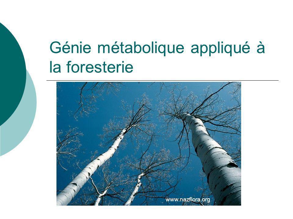 Génie métabolique appliqué à la foresterie