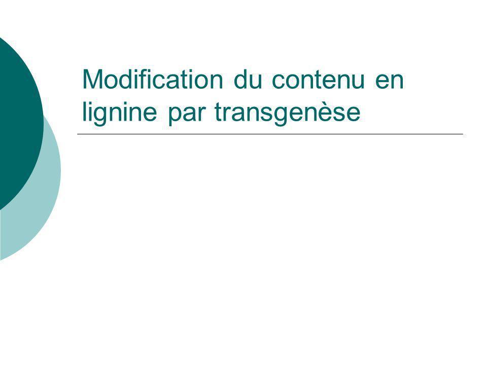 Modification du contenu en lignine par transgenèse