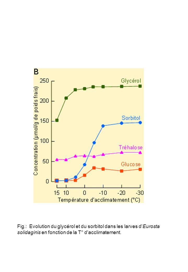 Fig.: Evolution du glycérol et du sorbitol dans les larves d Eurosta solidaginis en fonction de la T° d acclimatement.