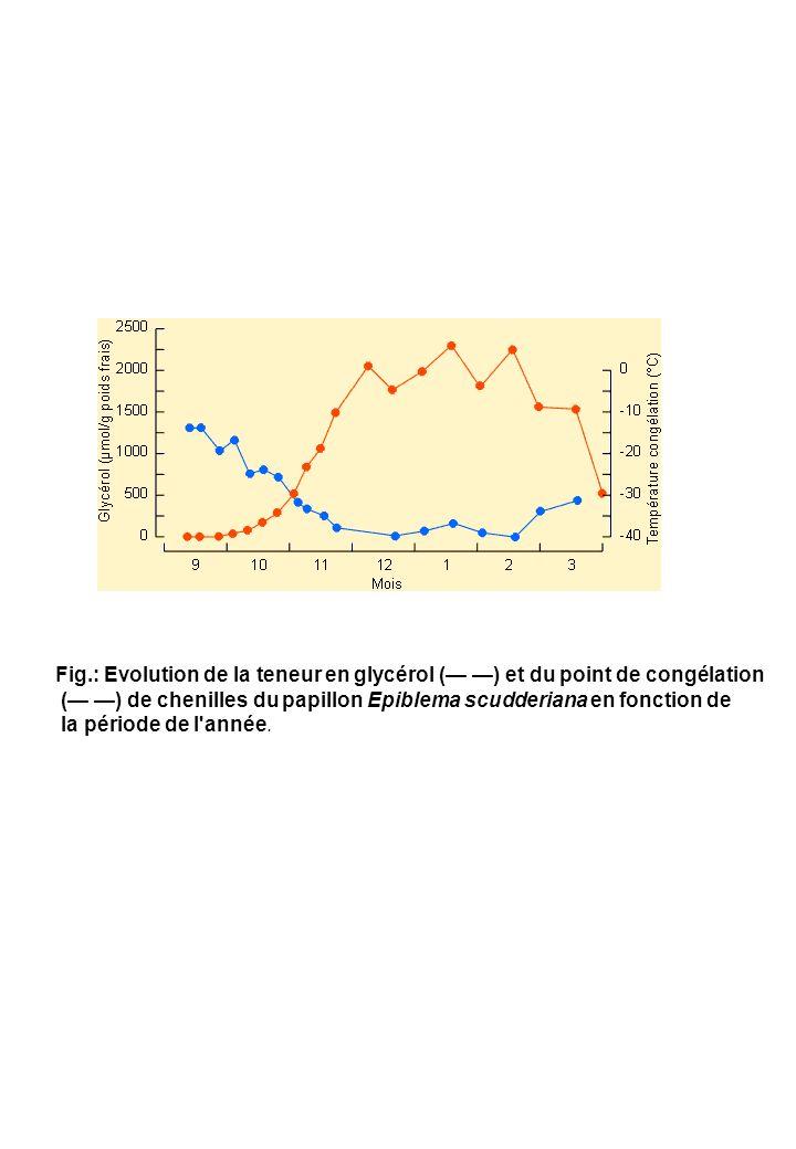 Fig.: Evolution de la teneur en glycérol (— —) et du point de congélation