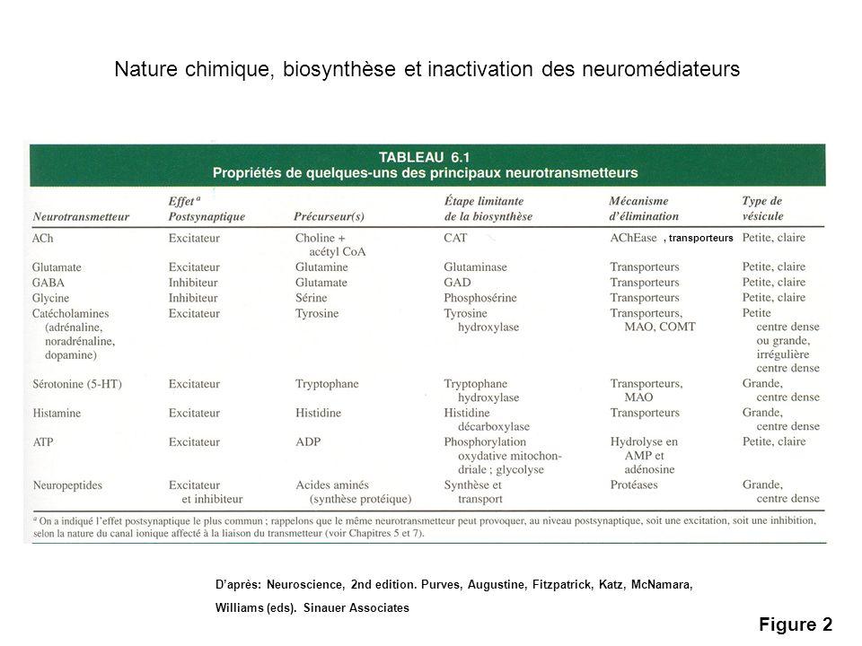 Nature chimique, biosynthèse et inactivation des neuromédiateurs
