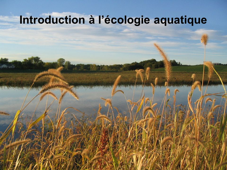 Introduction à l'écologie aquatique