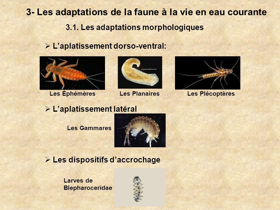 3- Les adaptations de la faune à la vie en eau courante