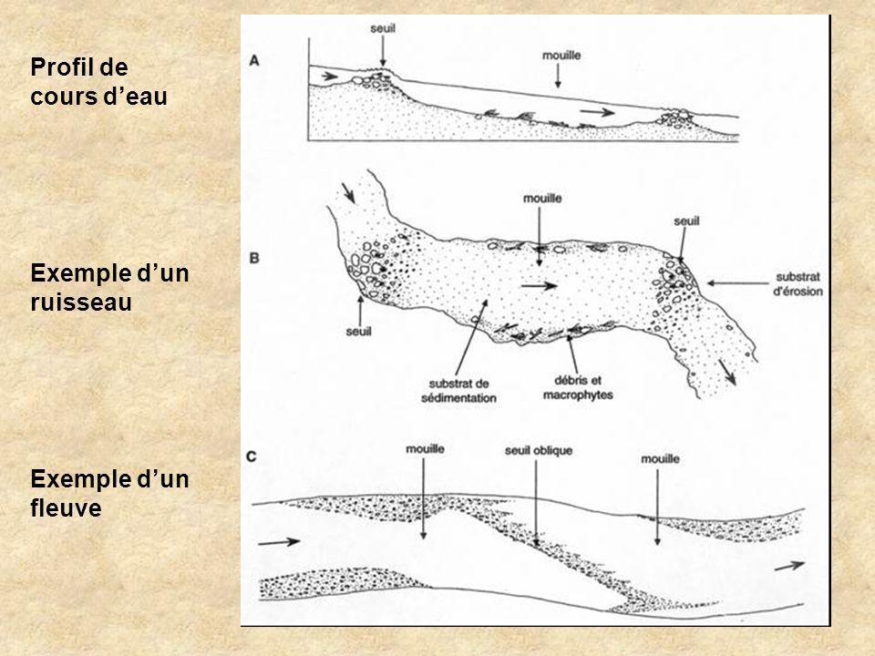Profil de cours d'eau Exemple d'un ruisseau Exemple d'un fleuve