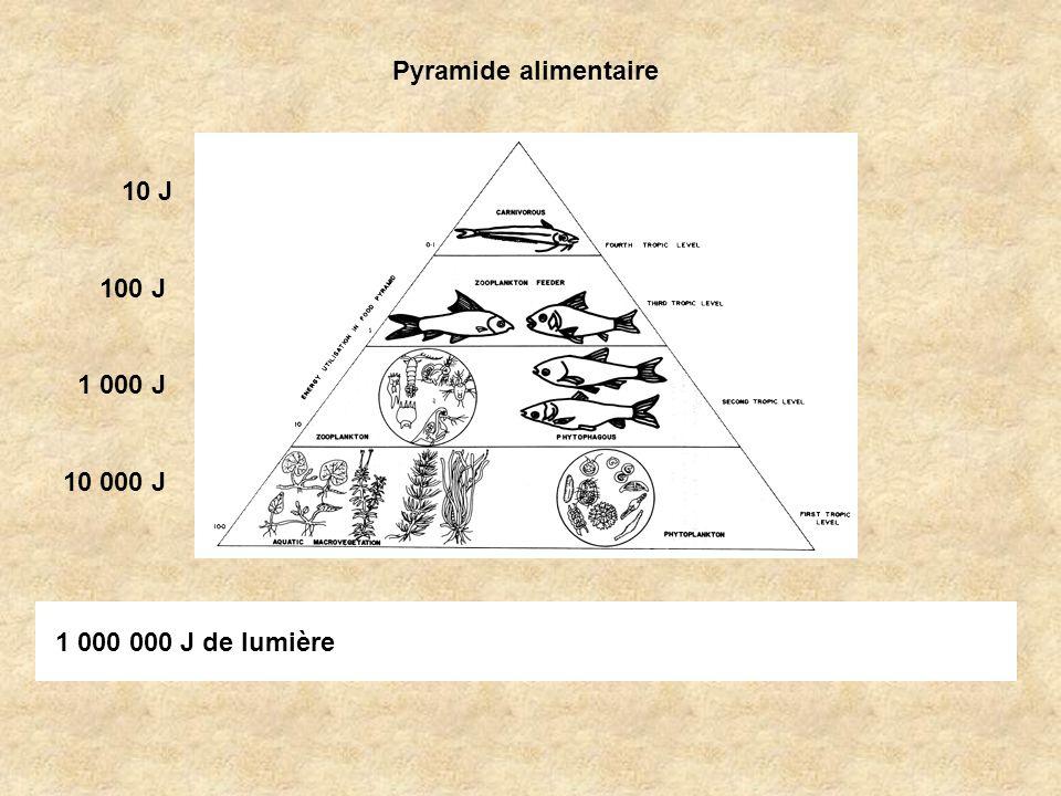 Pyramide alimentaire 10 J 100 J 1 000 J 10 000 J