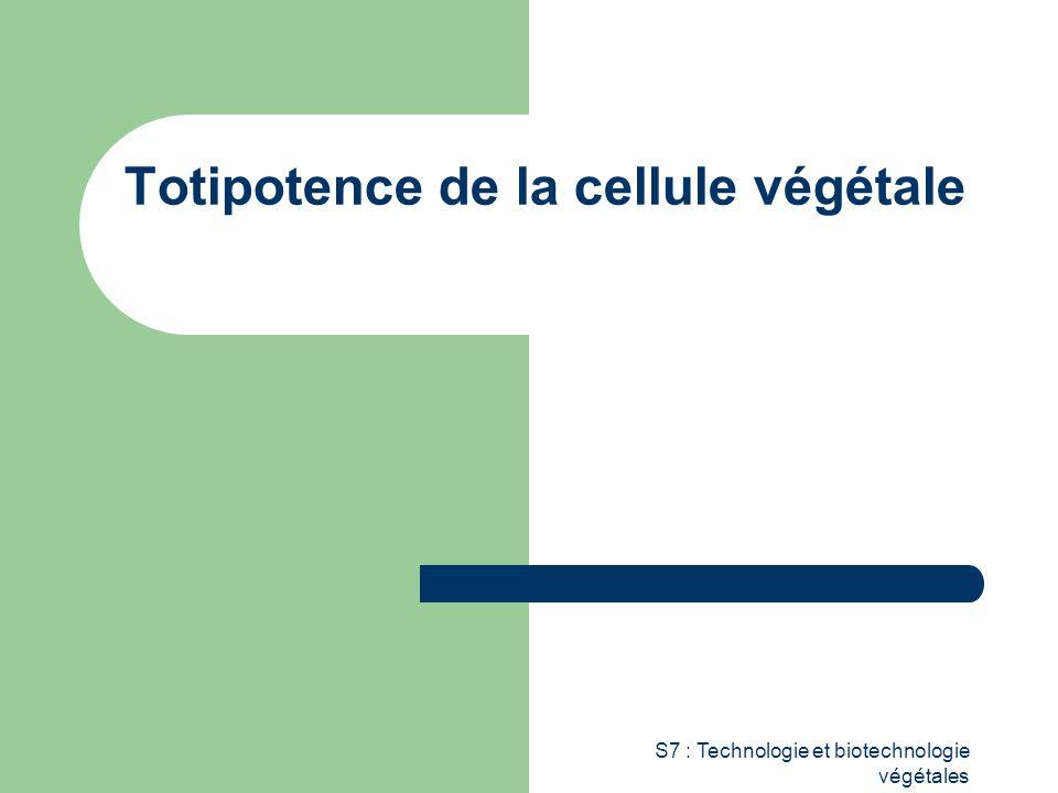 Totipotence de la cellule végétale
