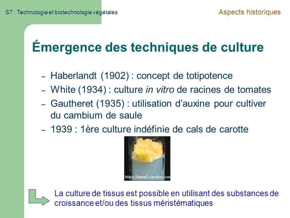 Émergence des techniques de culture