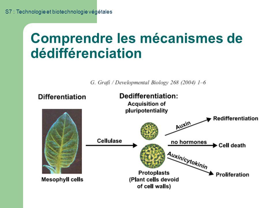 Comprendre les mécanismes de dédifférenciation