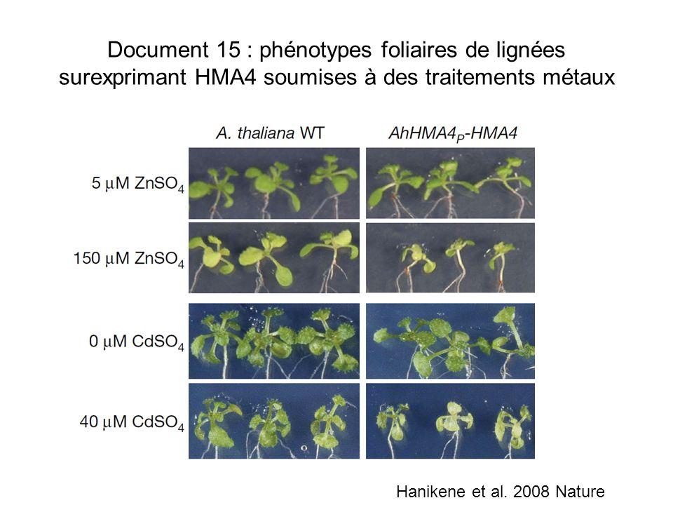 Document 15 : phénotypes foliaires de lignées surexprimant HMA4 soumises à des traitements métaux