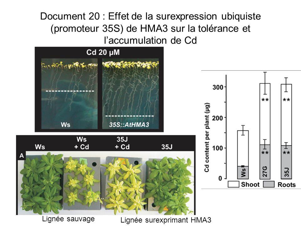 Document 20 : Effet de la surexpression ubiquiste (promoteur 35S) de HMA3 sur la tolérance et l'accumulation de Cd