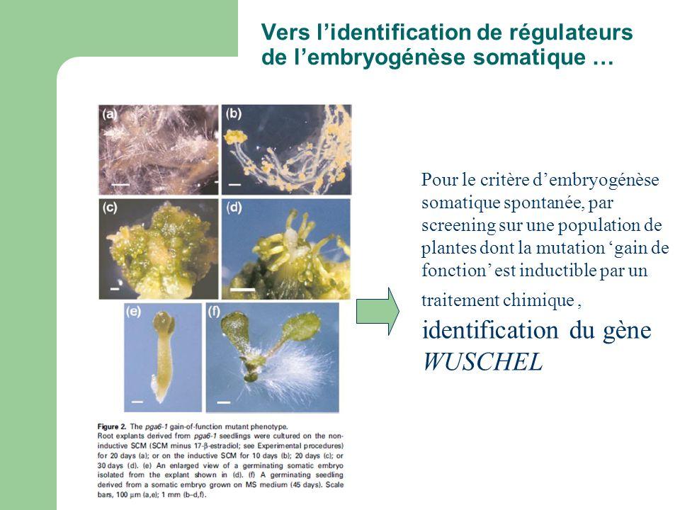 Vers l'identification de régulateurs de l'embryogénèse somatique …