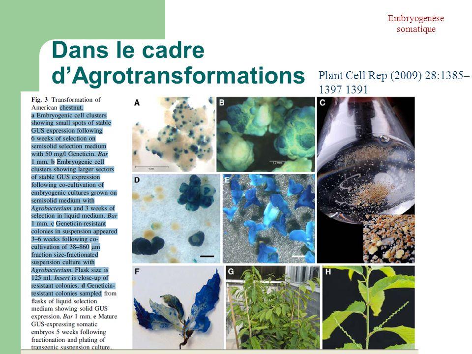 Dans le cadre d'Agrotransformations