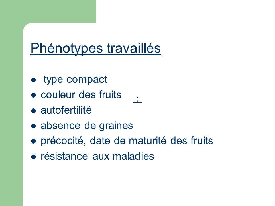 Phénotypes travaillés