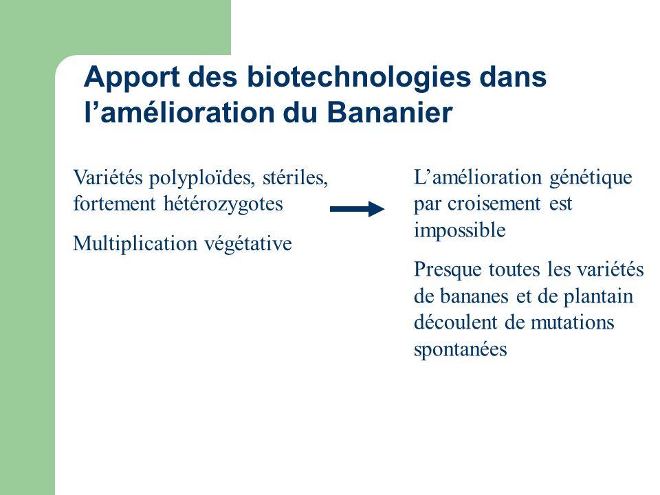 Apport des biotechnologies dans l'amélioration du Bananier