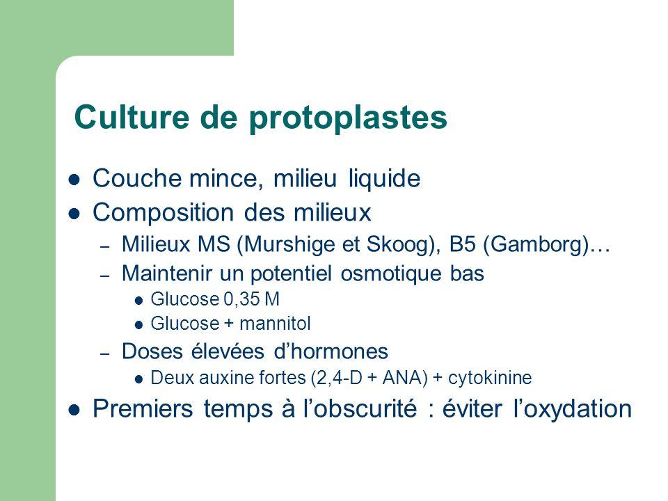 Culture de protoplastes