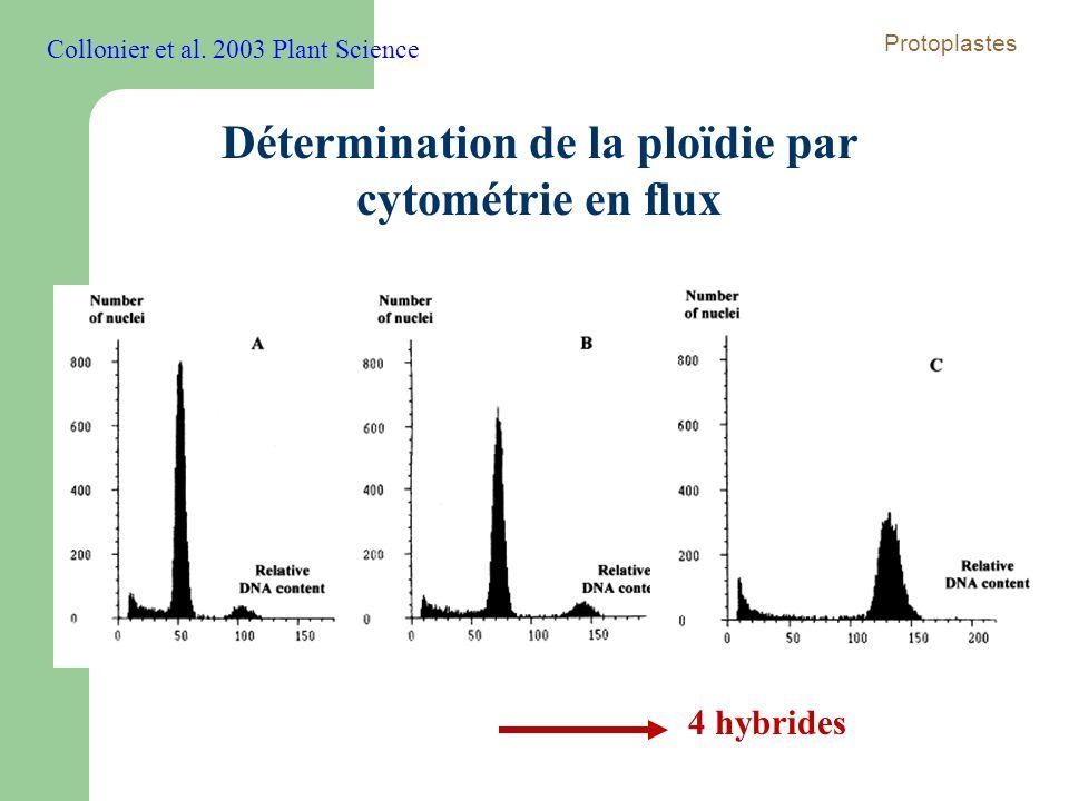 Détermination de la ploïdie par cytométrie en flux