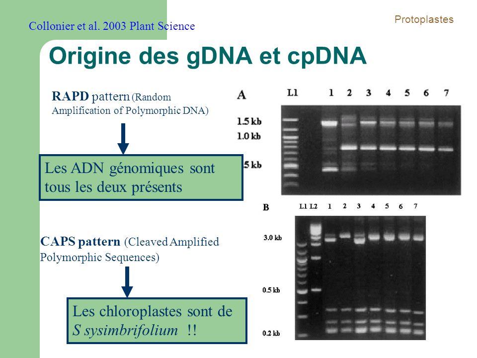 Origine des gDNA et cpDNA