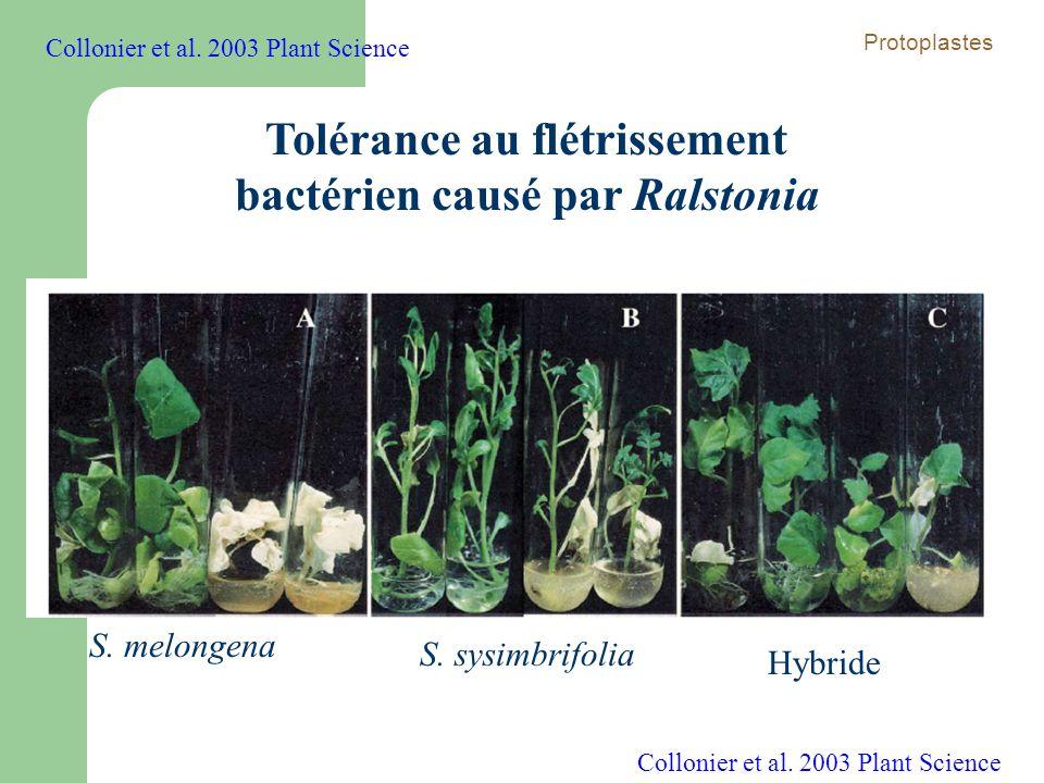 Tolérance au flétrissement bactérien causé par Ralstonia