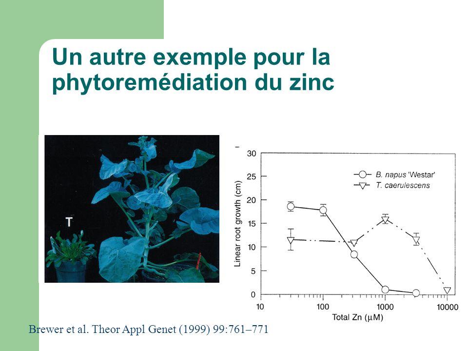 Un autre exemple pour la phytoremédiation du zinc