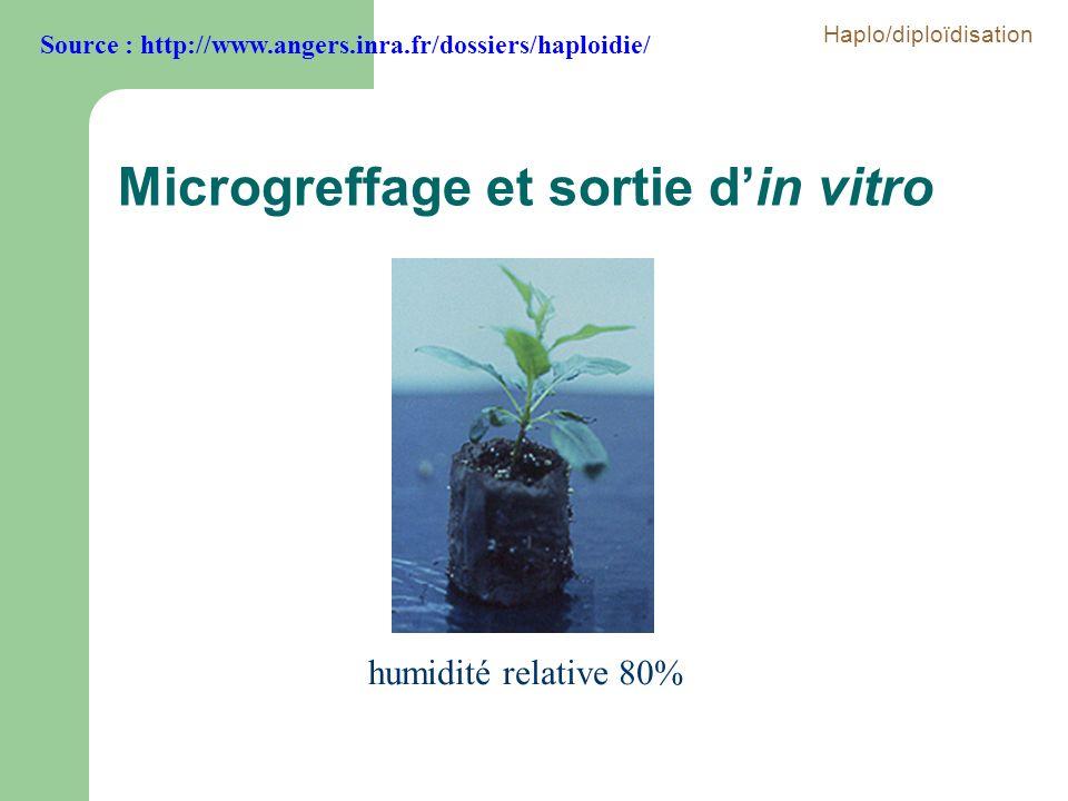Microgreffage et sortie d'in vitro