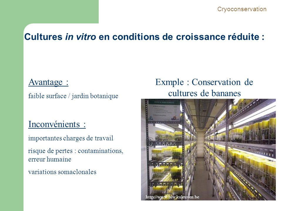 Exmple : Conservation de cultures de bananes