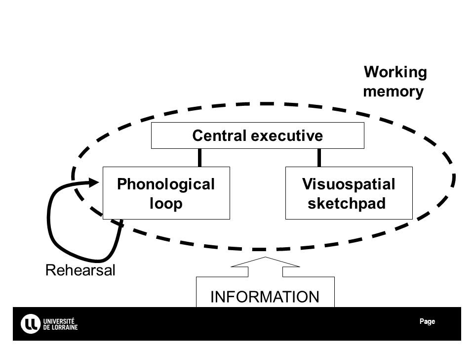 Working memory Central executive Phonological loop Visuospatial