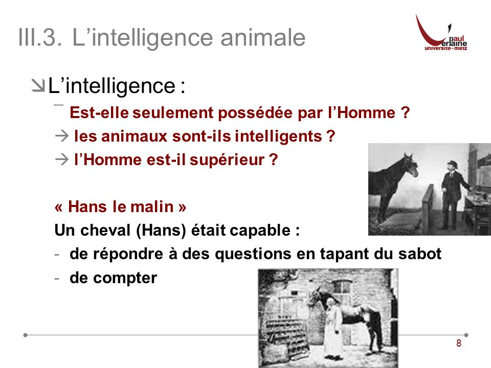 III.3. L'intelligence animale