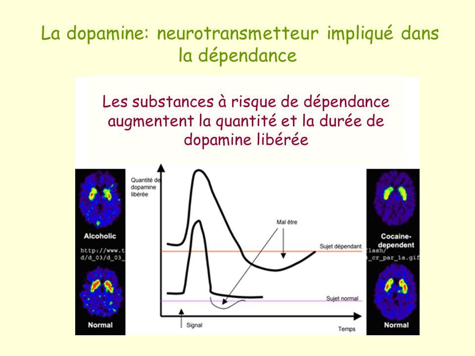 La dopamine: neurotransmetteur impliqué dans la dépendance