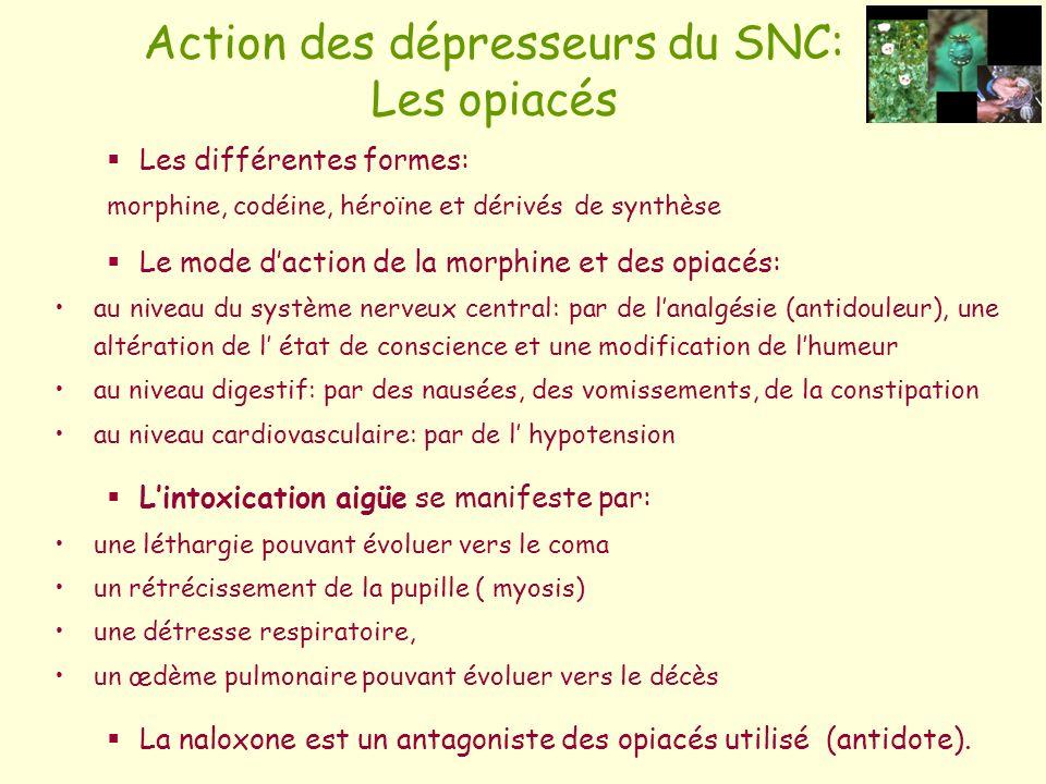 Action des dépresseurs du SNC: Les opiacés
