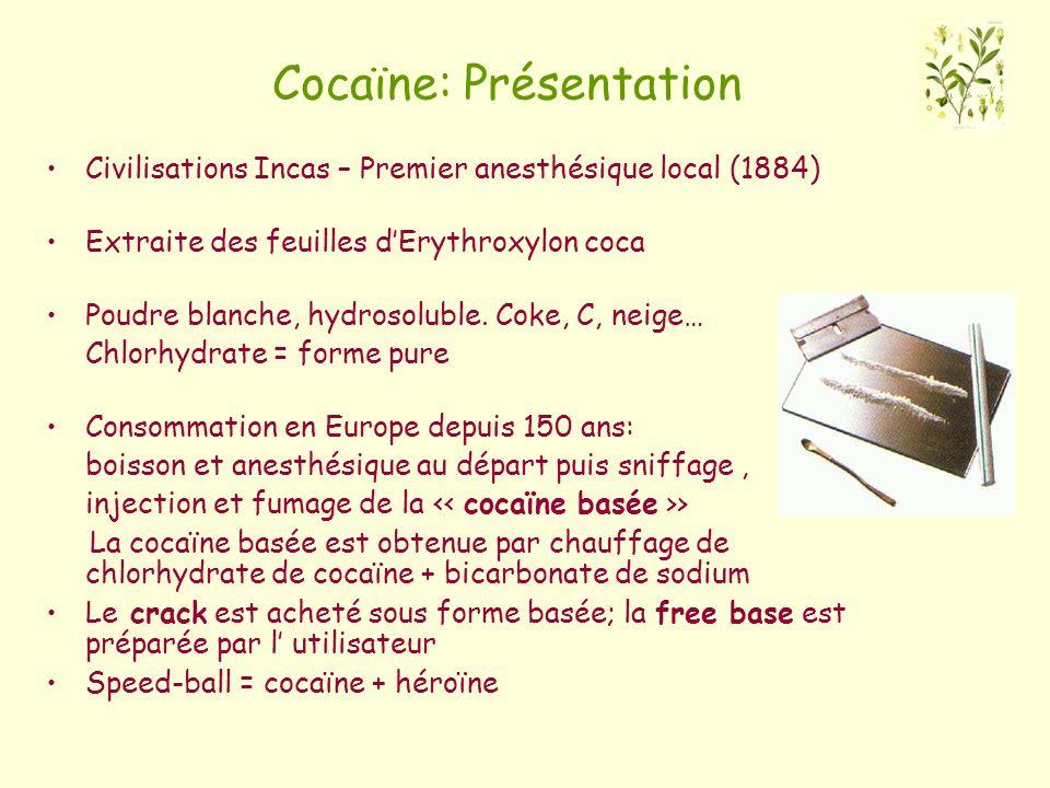 Cocaïne: Présentation
