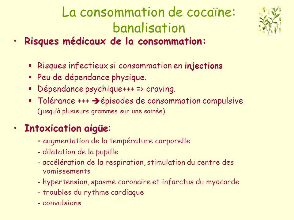 La consommation de cocaïne: banalisation