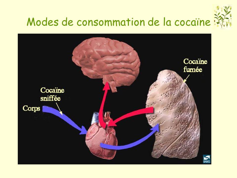 Modes de consommation de la cocaïne
