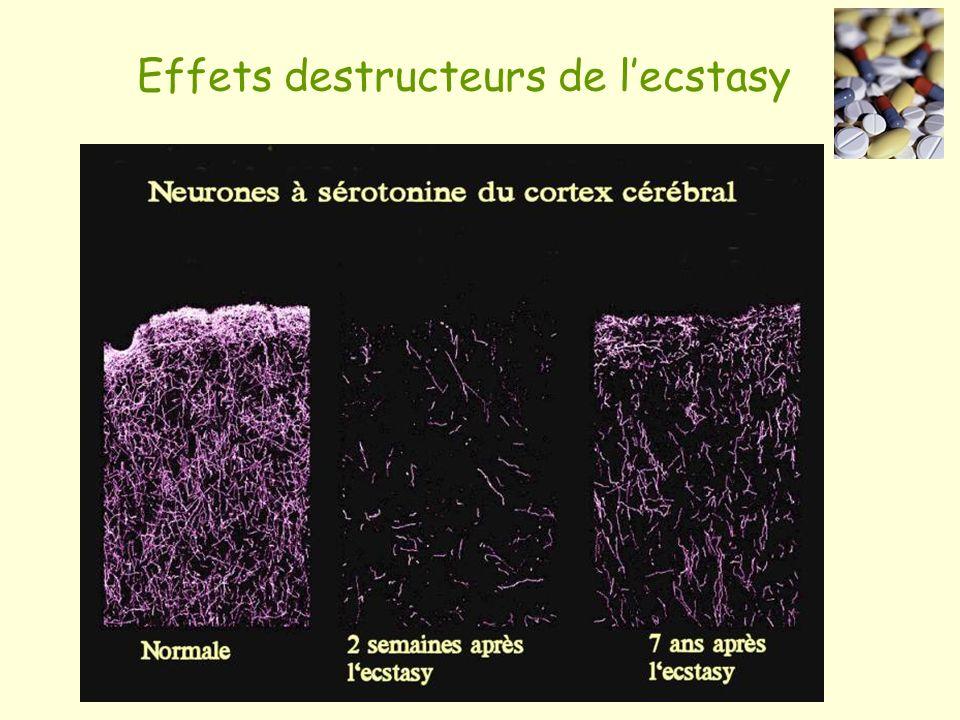 Effets destructeurs de l'ecstasy