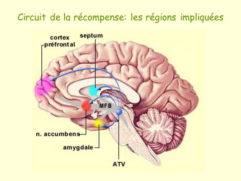 Circuit de la récompense: les régions impliquées