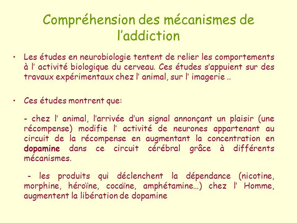 Compréhension des mécanismes de l'addiction