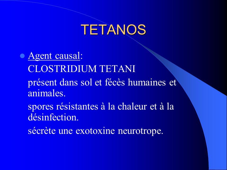 TETANOS Agent causal: CLOSTRIDIUM TETANI
