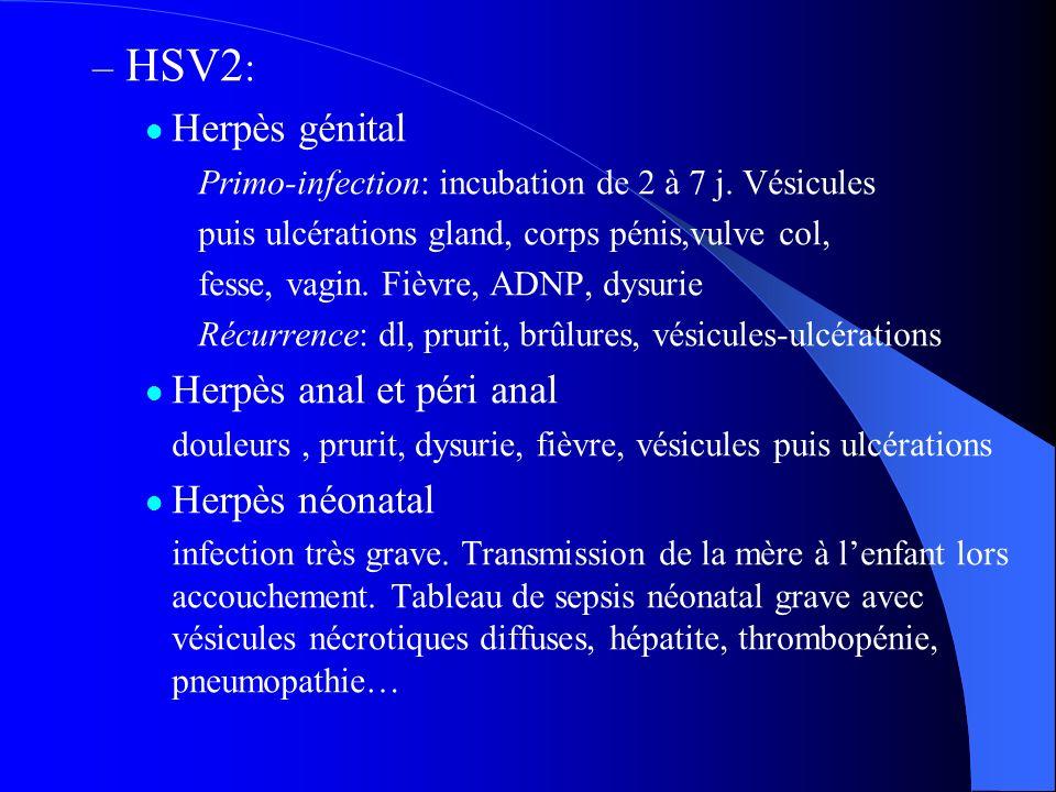HSV2: Herpès génital Herpès anal et péri anal Herpès néonatal